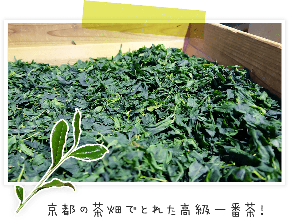 京都の茶畑でとれた高級一番茶!